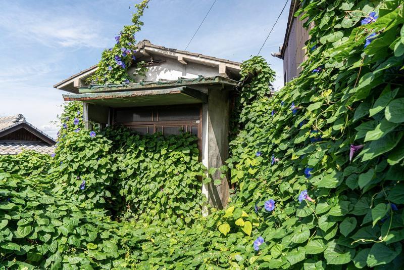 男木岛上一座被绿植覆盖的房子